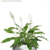 Настольное кашпо для цветов Idealist Lite Геометри, серебристое, Ш30 Д30 В15 см, 10 л