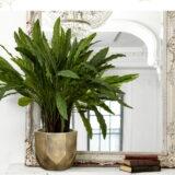 Настольное кашпо для цветов Idealist Lite Геометри, круглое, золотистое, Д30 В22 см, 15 л