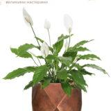 Настольное кашпо для цветов Idealist Lite Геометри, цвет - бронза, Ш25 Д25 В20 см, 12 л