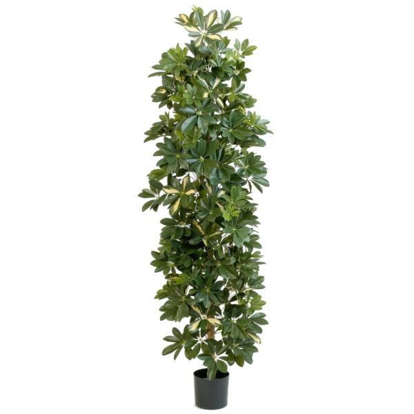 Искусственное растение Шеффлера колоновидная пестрая, высота 180 см