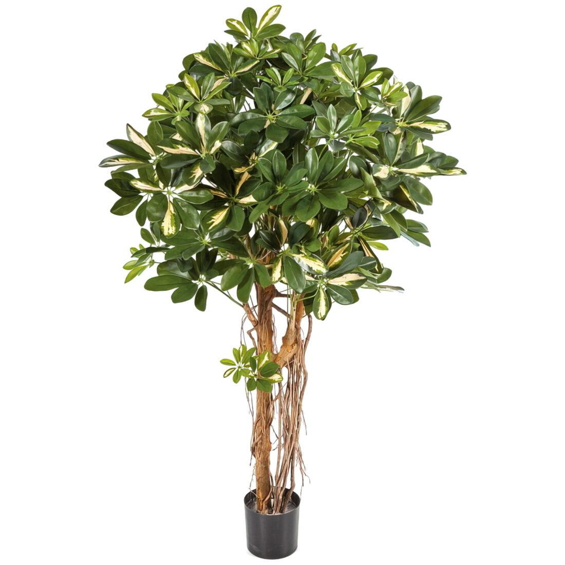 Искусственное растение Шеффлера зонтичная пестрая, высота 140 см