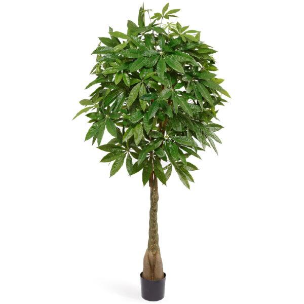 Искусственное растение Пахира на витом стволе, высота 165 см