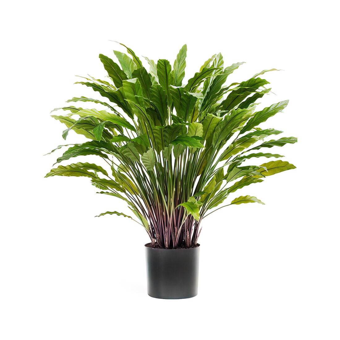 Искусственное растение Калатея зеленая, высота 85 см